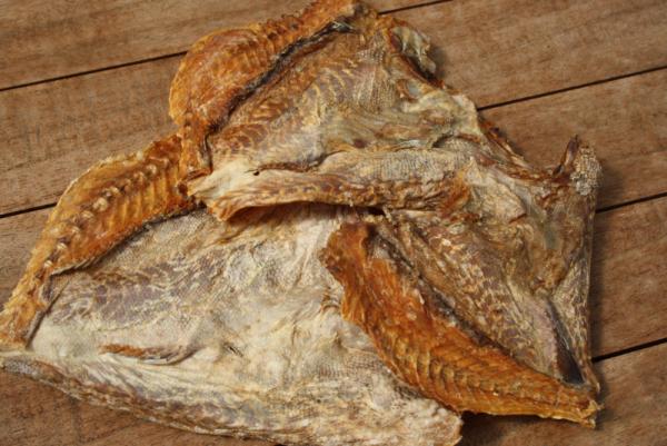 Croaker Fisch