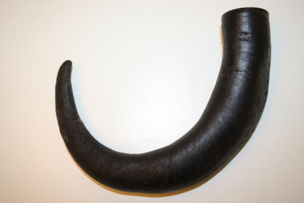Büffelhorn Größe M