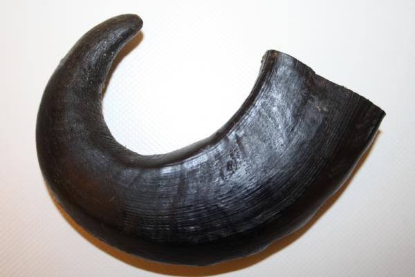 Büffelhorn Größe S