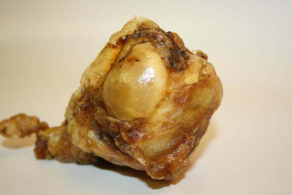 Kniescheibe vom Rind mit Fleisch